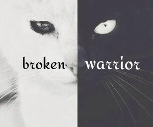 black, broken, and cat image