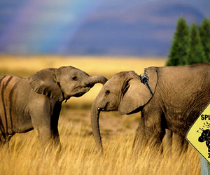 elephants, impossible, and ruby image