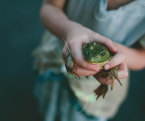 fairytale, frog, and green image