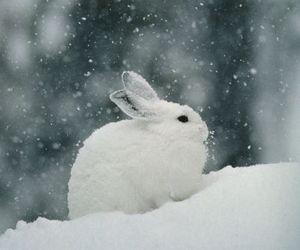 snow, rabbit, and bunny image
