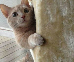 cats, cute, and surprese image