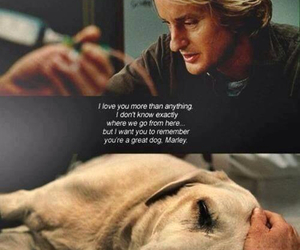 cry, dogs, and labrador image