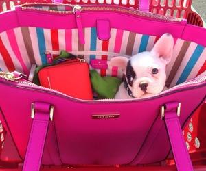 bag, dog, and pink image
