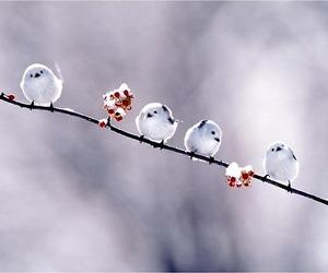 birds, winter, and cold season image