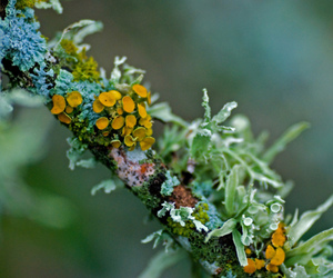 nature, lichen, and photography image