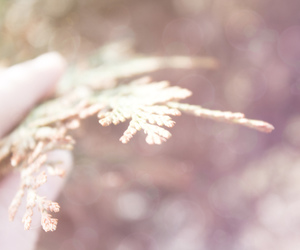 beauty, spring, and hand image