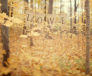 love, autumn, and leaves image