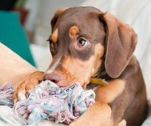 doberman, mix, and puppy image