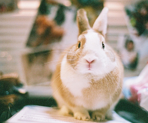 rabbit, animal, and photography image