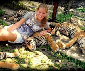 animals, thailand, and tigers image