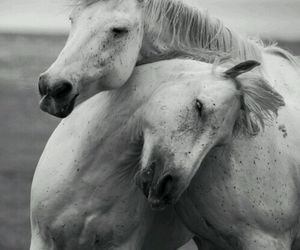 black and white, forest, and horses image