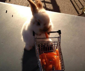 bunny and carrots image