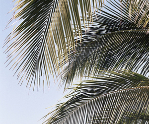 summer, palms, and beach image