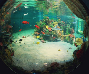 fish and fisheye image