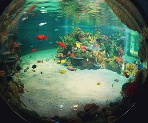 fish, fisheye, and aquarium image