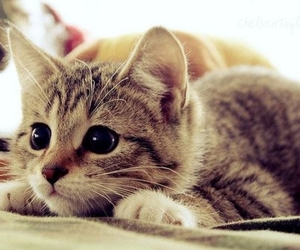 :), <3, and cat image