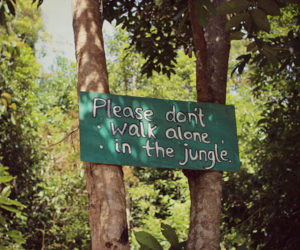 asia, photography, and jungle image