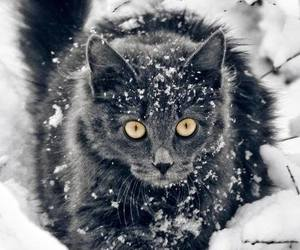 black, cat, and snow image