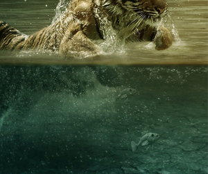 tiger, wallpaper, and water image