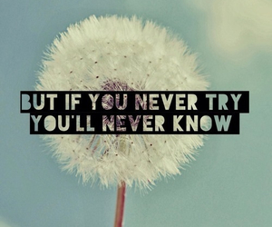 try, quote, and dandelion image