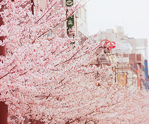 cherry blossom, kawaii, and pastel image