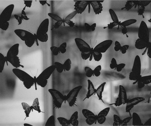 butterfly, black and white, and vintage image
