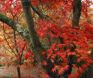 autumn, national trust, and surrey image
