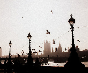 bird, london, and Big Ben image