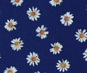 flowers, header, and wallpaper image