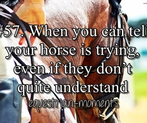 horse, equestrian, and quotes image