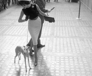 dog, vintage, and black and white image