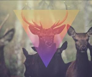 triangle, hipster, and deer image