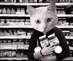 nutella, cat, and kitten image