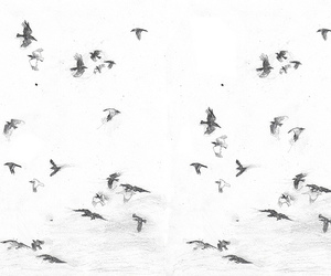 bird, black and white, and indie image