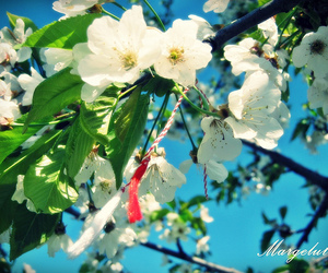 beautiful, flower, and white image