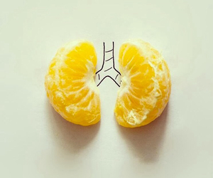 lungs, orange, and art image