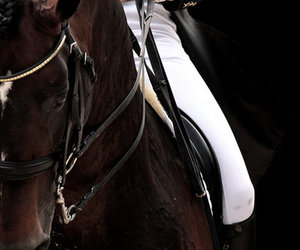 horse, dressage, and equestrian image