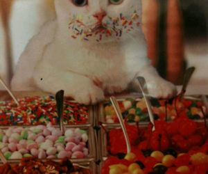 candy, colors, and cat image