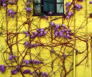 yellow, flowers, and purple image