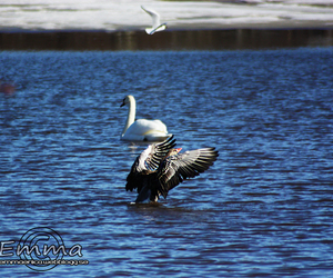 Action, birds, and water image