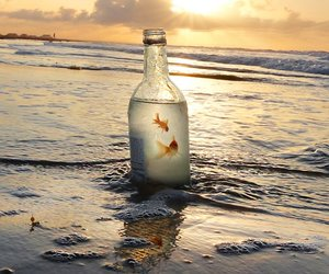 bottle, fish, and beach image