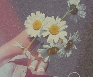 flowers, daisy, and music image