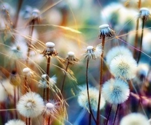 artsy, dandelion, and colorful image