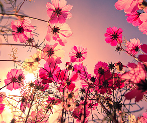 colorful, pink, and flowers image