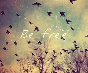 birds, free, and colors image