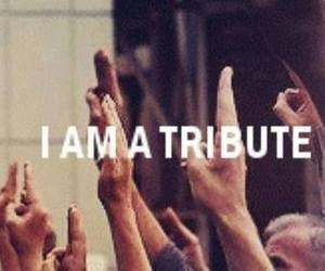 tribute, the hunger games, and hunger games image