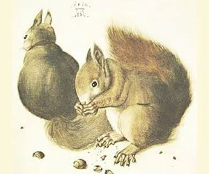 albrecht durer and squirrels image
