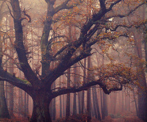 tree, forest, and autumn image