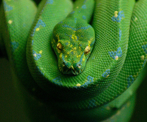 beautiful, green, and reptiles image