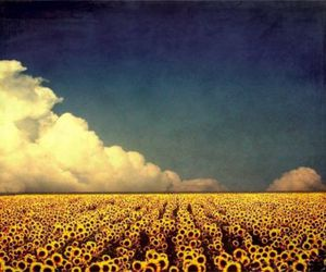 sunflower, clouds, and sky image